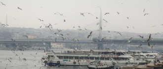 Чем заняться и куда можно сходить туристам в Стамбуле зимой?