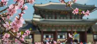 Страховка в Южную Корею для визы 2021: отзывы, цена, какая лучше для поездки